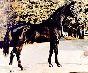 Cavalo Brasileiro de Hipismo