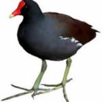 frango-dagua-1