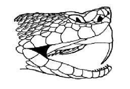 Mandíbula da Cobra