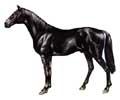 Cavalo Búlgaro