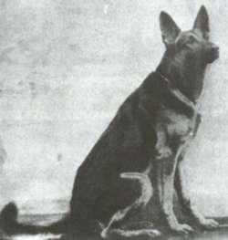 Sieger 1909 Hettel Uckermark