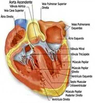 Sopro no Coração