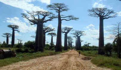 Locais Turísticos de Madagáscar
