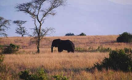 Locais Turísticos de Uganda
