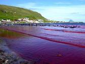 Ilhas Faroé: Baleeira