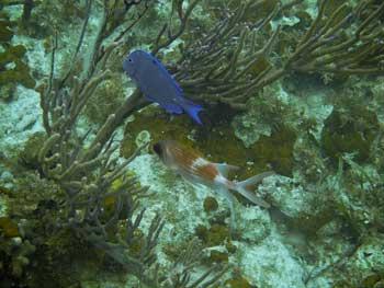 Ilhas Turks e Caicos