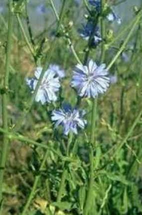 Florais de Minas