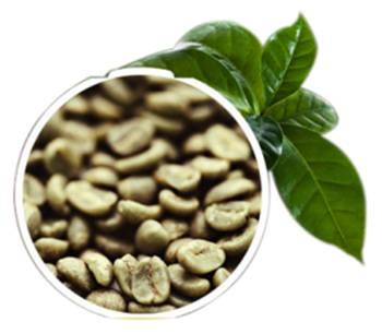 Produto Natural - Café Verde