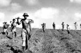 Dia da Reforma Agrária