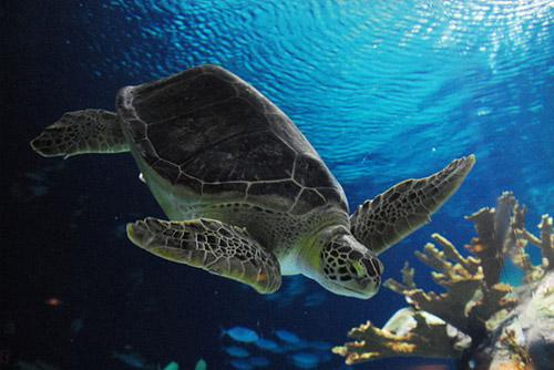 Dia Internacional da Tartaruga Marinha