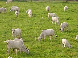 Dia Nacional da Pecuária