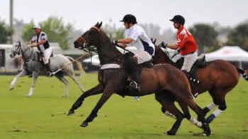 Pólo Equestre