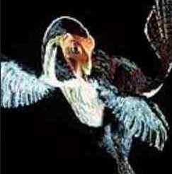 Aves Dinossauros