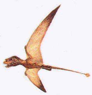 Batrachognatus
