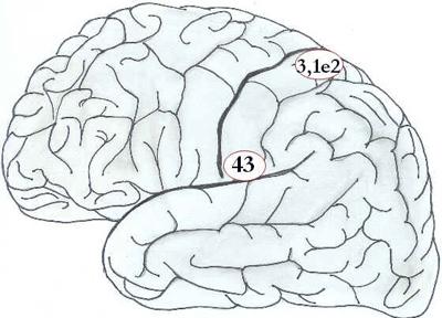 Córtex Cerebral