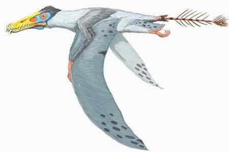 Dorygnathus