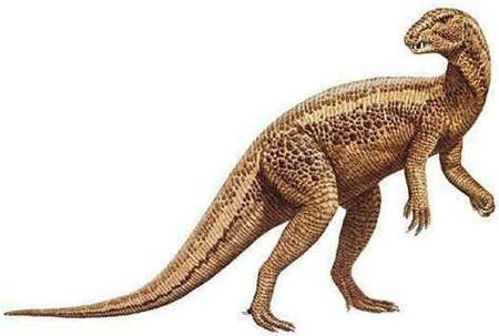 Heterodontossauro