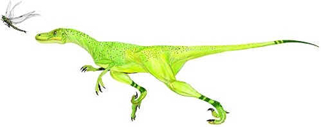 Saurornitholestes