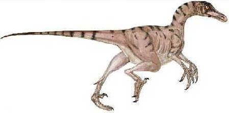 Troodonte