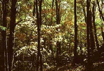 Floresta decídua - Biomas Terrestres