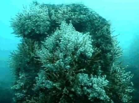 Corais em formação num recife