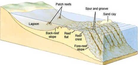 Estrutura de um recife de barreira