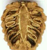 As pinhas ou cones são estruturas especializadas portadoras de sementes, exclusivas das coníferas, como abetos, cedros, pinheiros, ciprestes e piceas. As sementes são formadas dentro das pinhas. No pinheiro, o desenvolvimento pode durar até três anos. Pouco depois da maturação, as escamas protetoras abrem-se e liberam as sementes.