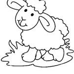 carneiro-6