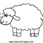 carneiro-8