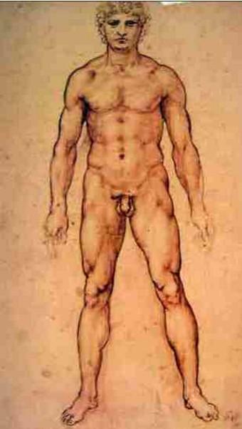 Estudo de um Nu Masculino - Leonardo da Vinci