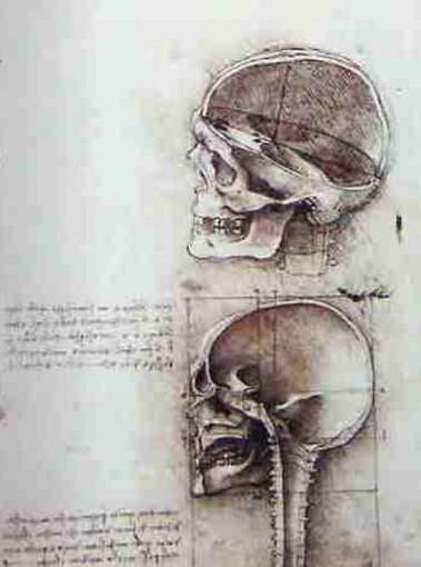 Desenhos Anatômicos - Leonardo da Vinci
