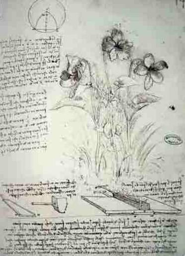 Estudo de Plantas - Leonardo da Vinci