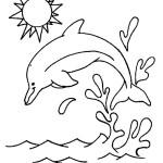 golfinhos-8