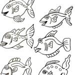 peixe-55