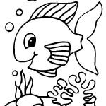 peixe-56