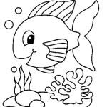 peixe-60
