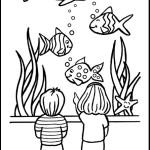 peixe-61