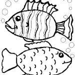 peixe-62