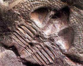 Período Ordoviciano
