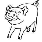 porco-79