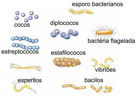 Tipos de Bactérias