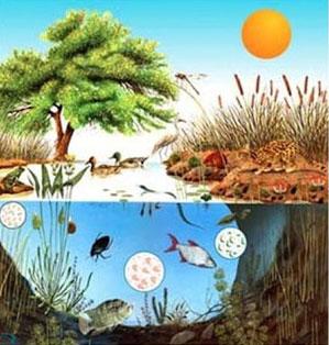 Ecologia do Ecossistema