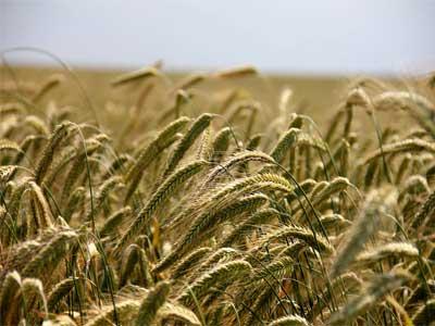Revolução Agrícola