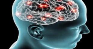 Neurofisiologia