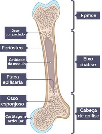 Ossificação