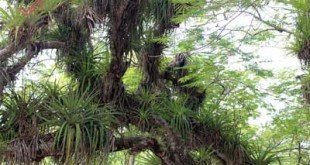 Plantas Epífitas