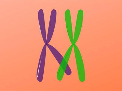 Cruzamento Cromossômico
