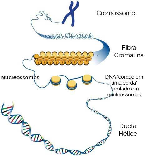 Nucleossomos