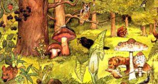 Biomas antropogênicos
