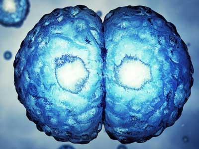 Epigênese
